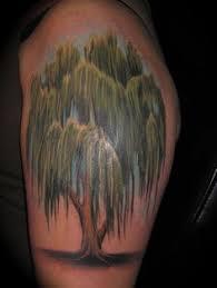 weeping willow tree drawings pinteres