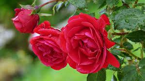 flower garden wallpaper romantic u2013 best wallpaper download