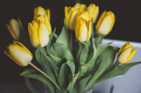 You Dont Bring Me Flowers - fixing relationship conflicts with emotionally focused couples