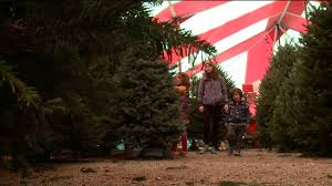 christmas tree lot owners say there u0027s a shortage of real trees