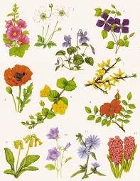 best 20 cosmos wedding flowers ideas on pinterest types of
