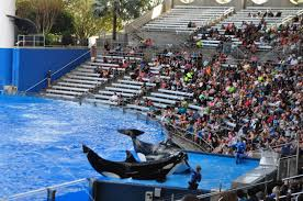 Map Of Seaworld Orlando by 3 Not To Miss Shows At Seaworld Orlando