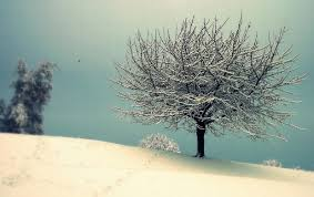snowy tree with vintage effect wallpapers