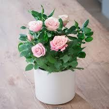 plant on desk desk plants cool office desk plant appleyard flowers