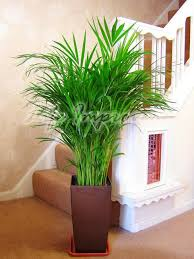 Green Home Decor That Cleans The Air Top Eco Friendly House Plants - Home decoration plants