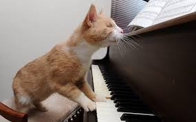 stevie wonder the blind piano playing cat who loves to entertain