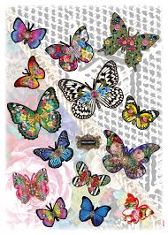 melli mello melli mello butterflies butterflies butterfly and