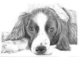 dog drawings pencil sketches of dogs and puppies for sale art