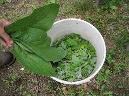 fertilizer tea from plants weeds and grass old farmer u0027s almanac
