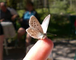 butterfly on finger tip photo image animals wildlife insects