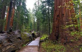 calaveras big trees state park recreation among the sequoias
