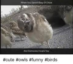 Funny Owl Meme - 25 best memes about owl funny owl funny memes