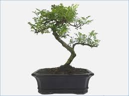 tree symbolism bonsai tree symbolism waterboard me