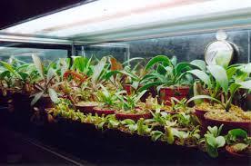 terrariums for cps u2014 petpitcher com