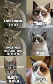 Mad Cat Memes - 12 best mad cat images on pinterest funny kitties too funny and