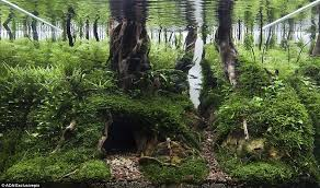 Aga Aquascape Aquarium Warfare Welcome To Competitive Sport Of Aquascaping At