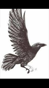 drawn crow open wing pencil and in color drawn crow open wing