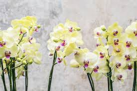 Orchid Flower Pic - free photo orchid flower floral nature free image on pixabay