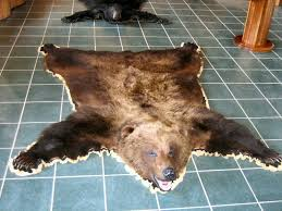 taxidermy for sale in pennsylvania bear taxidermy for sale deer