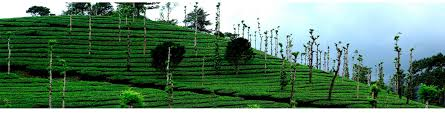 Munnar Cottages With Kitchen - munnar heritage cottages