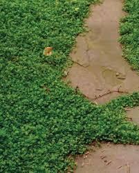 alternatives to grass in backyard low maintenance alternatives to lawns finegardening