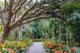 Botanical Garden Sydney by Top 5 Things To Do In Sydney