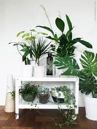plantes dans la chambre deco chambre interieur plantes vertes