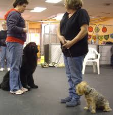 american kennel club programs u2014 communicate u0026 play dog training