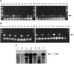 five novel immunogenic antigens in meningioma cloning expression