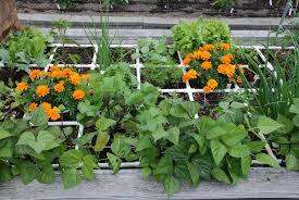square foot gardening flowers upcoming events washington county master gardeners washington