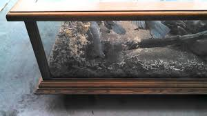 quail taxidermy coffee table explore wild az youtube