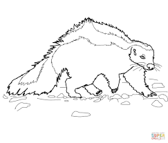 hog nosed striped skunk coloring page free printable coloring pages