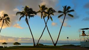 waialae country club has a w of palm trees and here s how it