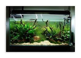 Aquascape Designs For Aquariums Decoration Contemporary Lighting Beautify Modern Aquascape
