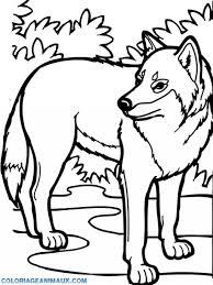 🎨Coloriage loup dans la forêt à imprimer