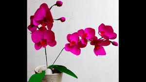 Orchid Flower Pic - how to make easy paper flowers orchid phalaenopsis moth orchid