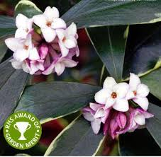 Very Fragrant Plants - flowers u0026 scented plants scented flowering plants fragrant