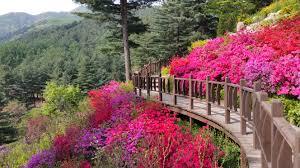 the garden of morning calm seoul kids