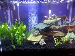 Live Plants In Community Aquariums by Community My Aquarium Club