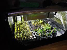 chauffage pour chambre de culture quand et comment semer les piments et poivrons tous au potager