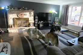 Best Flooring For Pets What Is The Best Flooring For Dogs Best Flooring For Pets Pergo