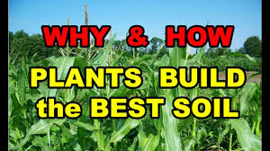 Gardening Vegetables For Beginners by Why U0026 How Plants Build Grow The Best Soil In Vegetable Gardens