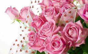 pink color images pink hd wallpaper and background photos 10579442 flowers pink color rose wallpapers desktop phone tablet