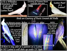 uv light for birds lutino