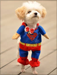 20 most awesome amazing u0026 adorable pet halloween costume photos
