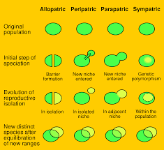 types of speciation evolution definitions