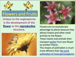 plant kingdom plants powerpoint and notes by amy brown science tpt