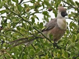 Canopy Birds by Birds Of The World Turaco