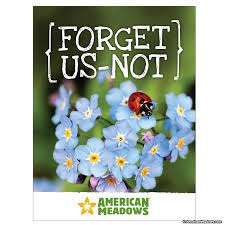 forget me not seed packets forget us not seed packet american