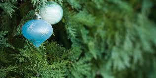 history of christmas trees u2013 tennessee christmas tree growers